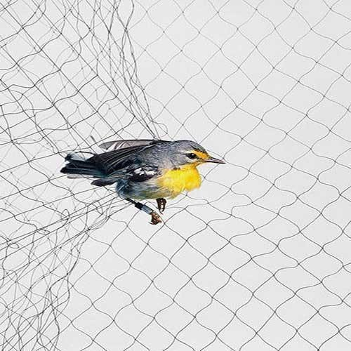 anti-bird-netting